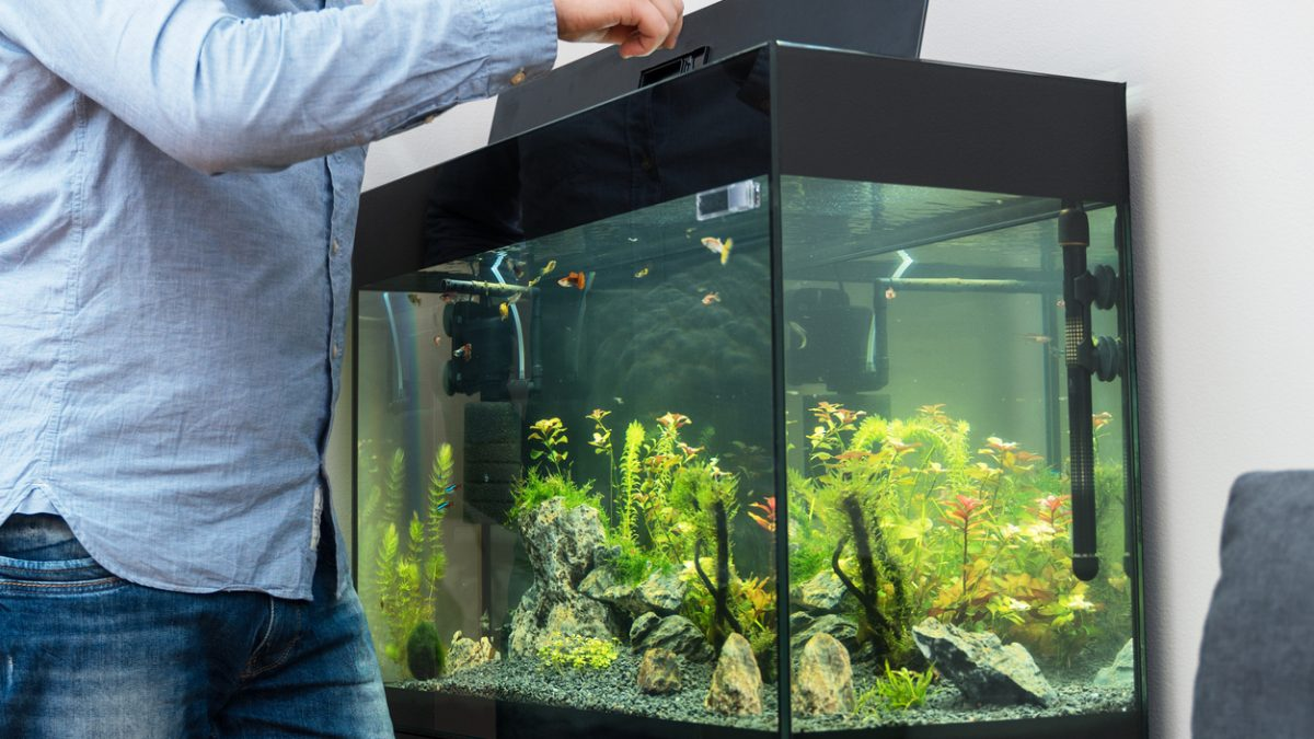 Why You Need Window Tint for Your Fish Tank